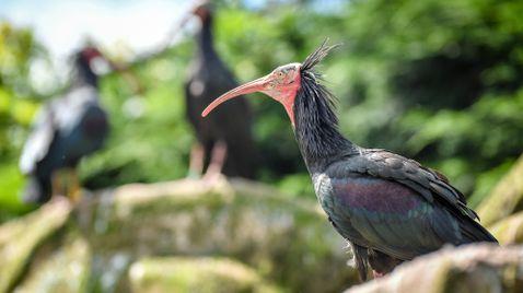 Zoo und so - Tierisch wild! auf Sky Nature