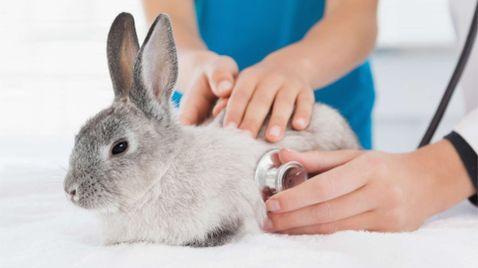 Menschen, Tiere & Doktoren auf VOXup