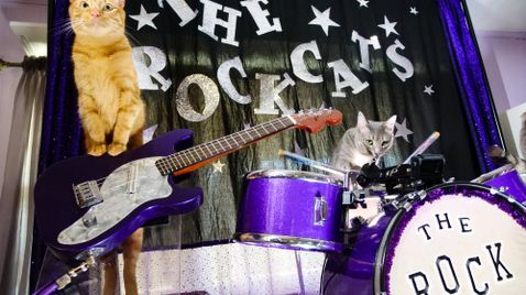 Die Katze - Mythisch, wild und vielgeliebt   TV-Programm Servus TV