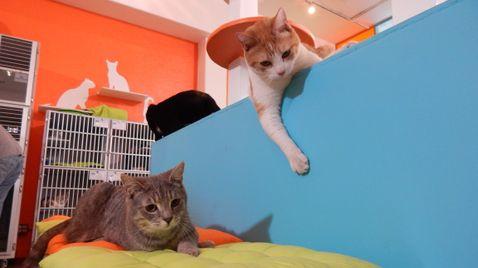 Der Katzenflüsterer auf Animal Planet