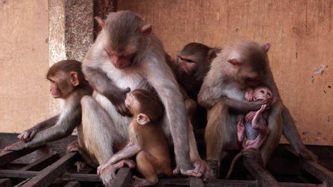 Die Affenbande auf Sky Nature