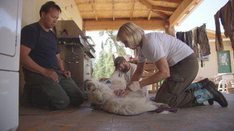 Dr. Dee: Tierärztin in Alaska
