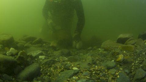 Goldtaucher der Beringsee auf Discovery Channel