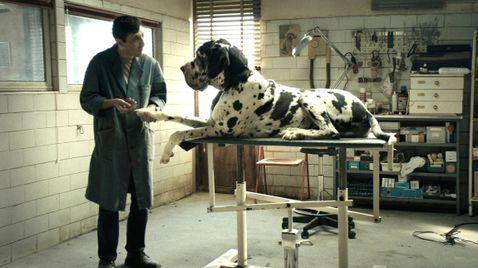 Dogman   TV-Programm Arte
