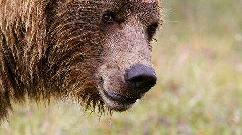 Alaska - Im Land der Bären |