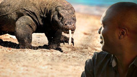 Giganten des Tierreichs