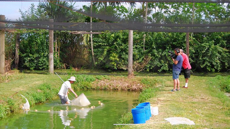 Fish Tank Kings - Gigantische Wasserwelten